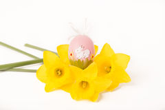 Easter egg in Jonquil primrose. Easter egg in spring flowers with background stock photography