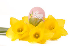 Easter egg in Jonquil primrose. Easter egg in spring flowers with background stock image