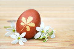 Easter egg with leaf pattern and white spring flowers Stock Photos