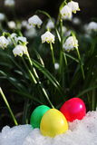 Easter egg meadow snowdrop Royalty Free Stock Photos