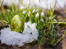 Easter egg meadow snowdrop Stock Photo