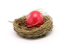 Easter egg in nest Stock Images