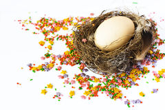 Easter egg in the nest Stock Photos