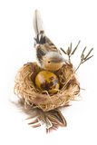 Easter egg in nest with bird Stock Photography