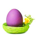 Easter egg in nest Royalty Free Stock Photos