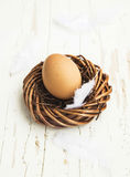 Easter Egg in a Nest with Feathers Stock Photography