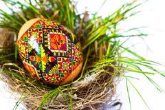 Easter egg in nest grass. Easter egg hidden in the green grass royalty free stock photo