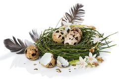 Easter egg nest Royalty Free Stock Photo