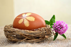 Easter egg in the nest and red clover flower Stock Photo