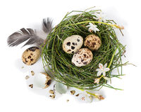 Easter egg nest, top view Royalty Free Stock Photos