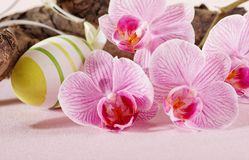 Easter egg and orchid flowers Royalty Free Stock Images