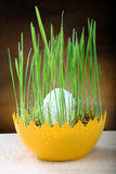 Easter egg overgrown wet oat grass Stock Photo