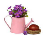 Easter egg and primrose flowers arranged in watering bucket, isolated on white Stock Images