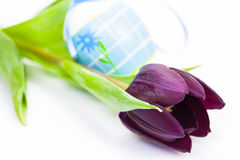 Easter egg and Purple Colored Tulip Stock Images