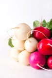 Easter egg radishes with copy space. Bunch of organically grown, freshly harvested, colorful Easter egg radishes, isolated over white, close up, vertical Stock Photography