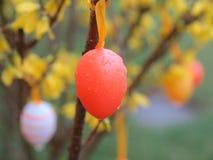 Easter egg rain Royalty Free Stock Photo