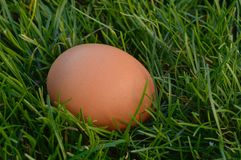 Easter egg. Single easter chicken egg on green grass Royalty Free Stock Photography