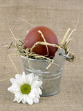 Easter egg in small bucket Royalty Free Stock Image