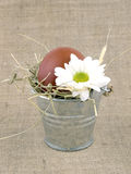 Easter egg in small bucket Royalty Free Stock Photos