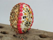 Easter egg with spices. Easter egg decorated with spices and flower shaped pasta Royalty Free Stock Image