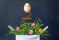Easter egg and spring flower meadow in the box surprise abstract unique concept Stock Images