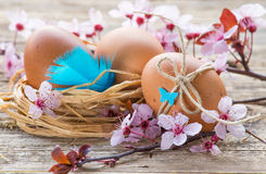 Easter egg and spring flowers Stock Photography