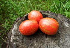 Easter egg tomatoes Stock Photography