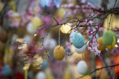Easter egg tree Stock Image
