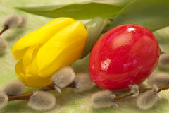 Easter egg and tulip Royalty Free Stock Image