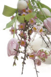 Easter egg tulip Salix sakura pearl Royalty Free Stock Photography