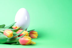 Easter egg with tulips Stock Images