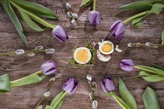 Easter egg with tulips and willow twig. Cut egg in circle composition with purple tulips and willow twigs. View from above. Royalty Free Stock Photo