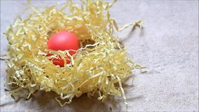Easter egg turns in a nest stock footage