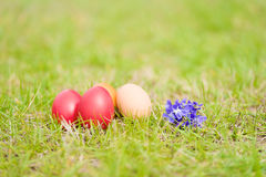 Easter egg and violet flower in the green grass Royalty Free Stock Images