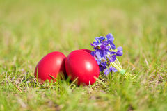 Easter egg and violet flower in the green grass Royalty Free Stock Photography