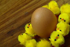 Easter egg and yellow chicks Royalty Free Stock Images