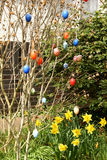 Easter eggs. Some colourfull easter eggs hanging at branches Royalty Free Stock Photography