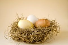 Easter eggs. Coloured easter eggs in a nest Stock Images