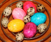 Easter eggs. Coloured eggs and partridge eggs Royalty Free Stock Photo