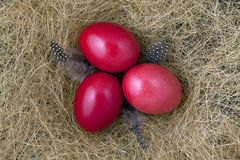 Easter Eggs. Three red Easter eggs on straw Royalty Free Stock Images