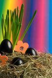 Easter eggs. Black easter eggs with colourful background Royalty Free Stock Photos
