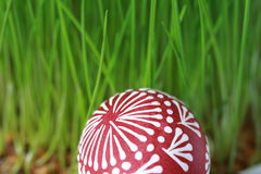Easter eggs. In the grass Stock Photos
