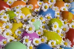Easter eggs. Colorful Easter and spring with daisies Stock Photo