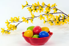 Easter eggs. Easter  colorful eggs with forsythia-branch Royalty Free Stock Image