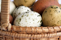 Easter Eggs. In a basket Royalty Free Stock Photography