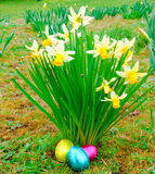Easter eggs. At base of daffodil clump Royalty Free Stock Photography