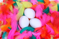 Easter eggs. In a nest of colored feathers Royalty Free Stock Photo