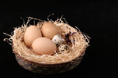 Easter eggs. In basket on black background Royalty Free Stock Photography