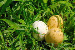 Easter Eggs. Three painted easter eggs on the green grass background Royalty Free Stock Photos