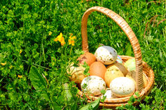 Easter Eggs. In a basket on the green grass background Royalty Free Stock Photography